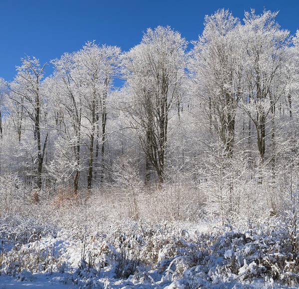 Blue Sky Print featuring the photograph Snow Covered Maple Trees Iron Hill by David Chapman