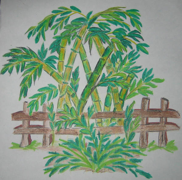 Bamboo Print featuring the drawing Bamboo by Deepa Padmanabhan