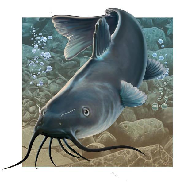 Fish Print featuring the digital art Catfish by Valer Ian