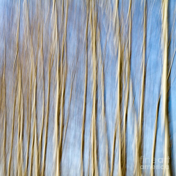 Aspen Print featuring the photograph Birch Trees by Stelios Kleanthous