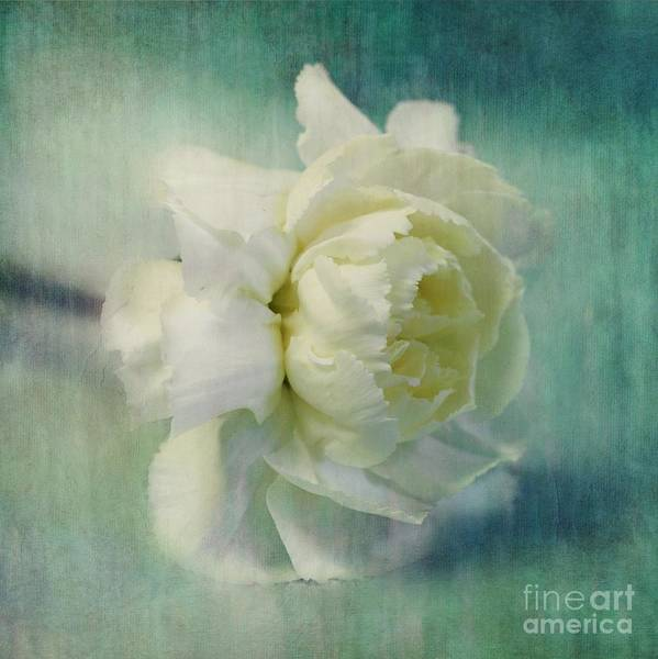 Carnation Print featuring the photograph Carnation by Priska Wettstein