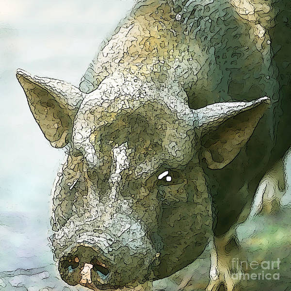 Pig Print featuring the photograph Here's Woody by Artist and Photographer Laura Wrede