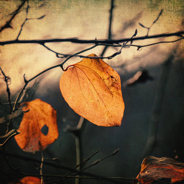 Leaf Print featuring the photograph Last Leaves by Taylan Soyturk