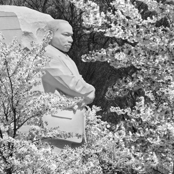 Landmarks Print featuring the photograph Martin Luther King Memorial Through The Blossoms by Mike McGlothlen
