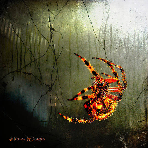 Spider Print featuring the photograph Nightmares by Karen Slagle