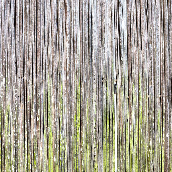 Abstract Print featuring the photograph Reeds Background by Tom Gowanlock