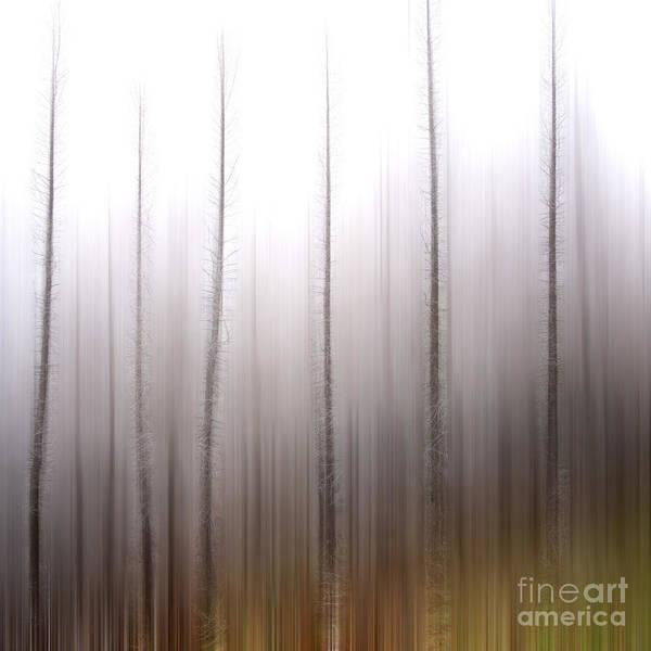 Bare Print featuring the photograph Tree Trunks by Bernard Jaubert