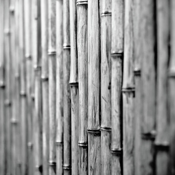 Square Print featuring the photograph Bamboo Fence by George Imrie Photography