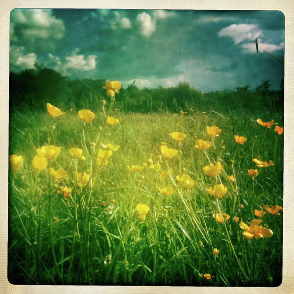 Square Print featuring the photograph Buttercups by Neil Carey Photography