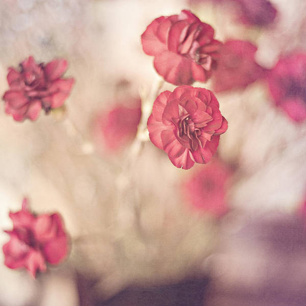 Floral Print featuring the photograph I Still Believe by Joel Olives