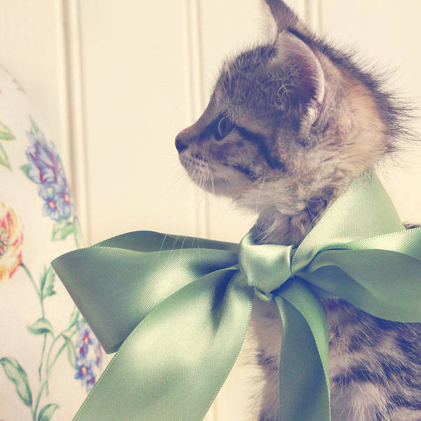 Kitten Print featuring the photograph All Dressed Up by Amy Tyler