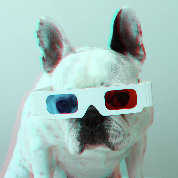 Square Print featuring the photograph French Bulldog With 3d Glasses by Retales Botijero