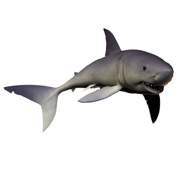 Mako Shark Print featuring the digital art Mako Shark by Corey Ford