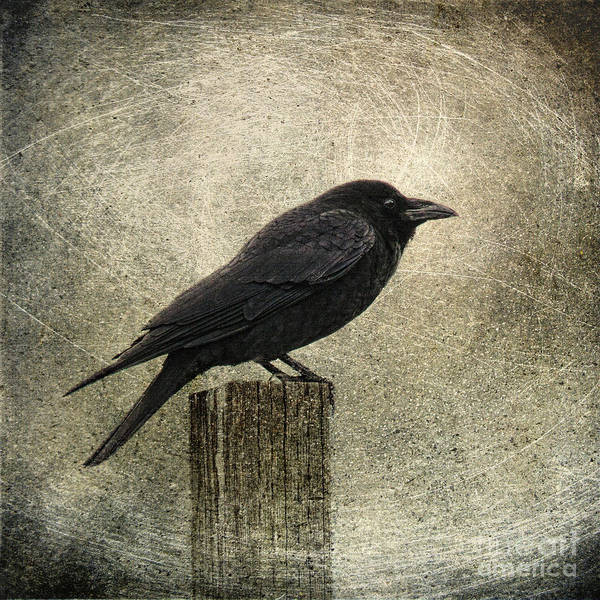 Raven Print featuring the photograph Raven by Elena Nosyreva