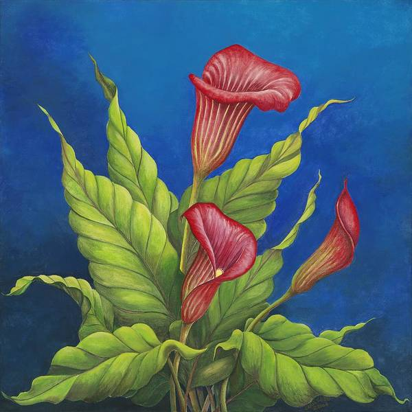 Red Calla Lillies On Blue Background Print featuring the painting Red Calla Lillies by Carol Sabo