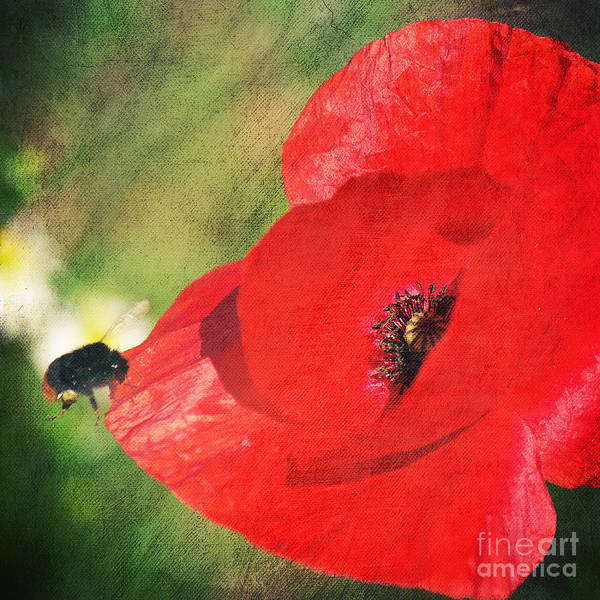 Flower Print featuring the photograph Red Poppy Impression by Angela Doelling AD DESIGN Photo and PhotoArt