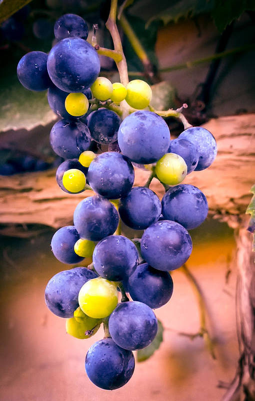 Grapes Print featuring the photograph Taste Of Nature by Karen Wiles
