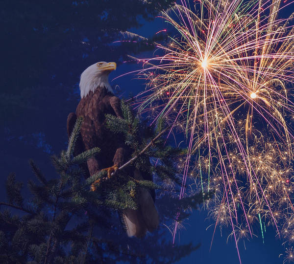 Fireworks Print featuring the photograph American Pride by Angie Vogel