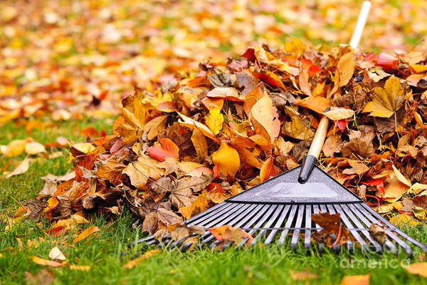 Rake Print featuring the photograph Fall Leaves With Rake by Elena Elisseeva