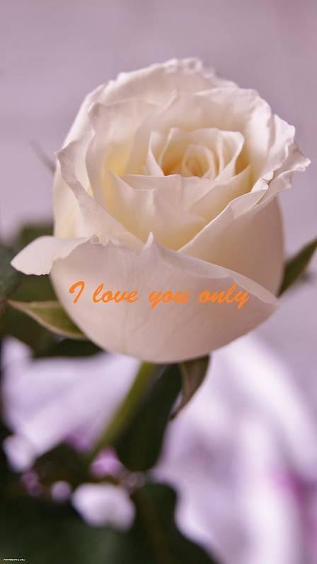 Rose For You Print by Gornganogphatchara Kalapun