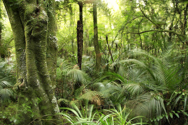 Forest Print featuring the photograph Tropical Jungle by Les Cunliffe