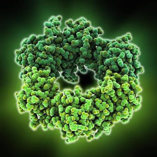 Molecule Print featuring the photograph Dna Polymerase IIi Subunit Molecule by Science Photo Library
