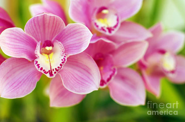 Abstract Print featuring the photograph Orchids by Carlos Caetano