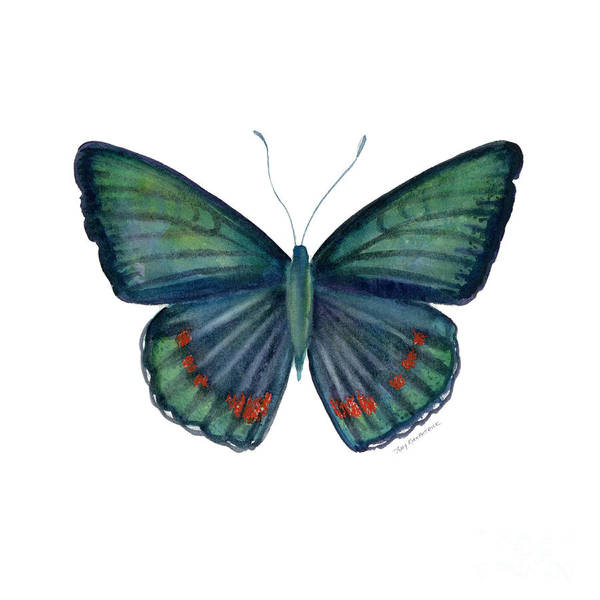 Teal Green Butterfly Print featuring the painting 82 Bellona Butterfly by Amy Kirkpatrick