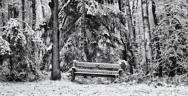 Snow Print featuring the photograph A Quiet Place by Tim Gainey