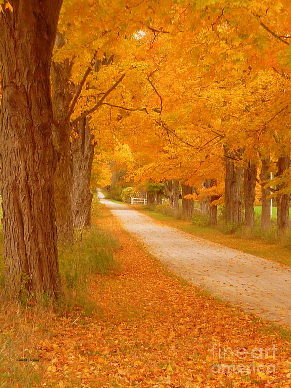 Autumn Photography Print featuring the photograph A Romantic Country Walk In The Fall by Lingfai Leung
