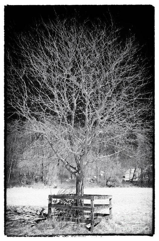 A Tree In The Snow Print featuring the photograph A Tree In The Snow by John Rizzuto