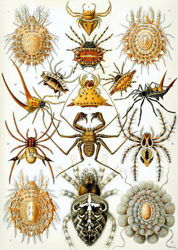 Arachnida Print featuring the digital art Arachnida by Georgia Fowler