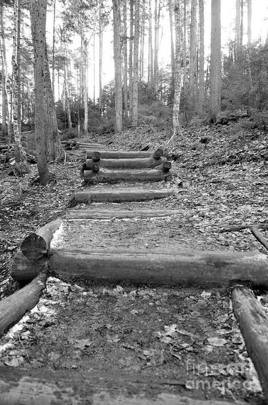 Areuthuas Falls Mountain Trail Print featuring the photograph Arethusa Falls Mountain Trail by Catherine Reusch Daley