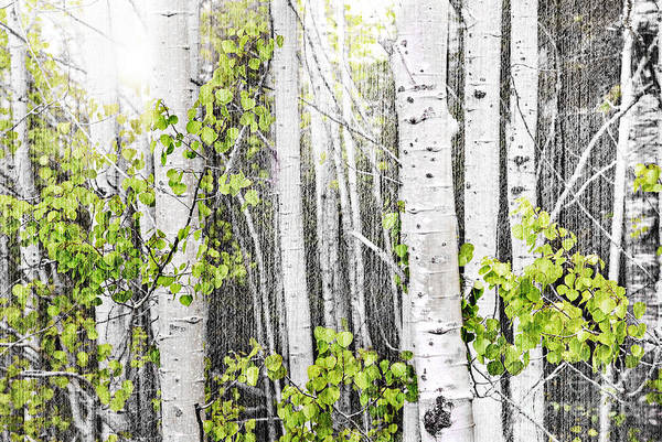 Aspen Print featuring the photograph Aspen Grove by Elena Elisseeva