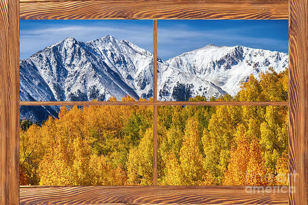 Trees Print featuring the photograph Autumn Aspen Tree Forest Barn Wood Picture Window Frame View by James BO Insogna