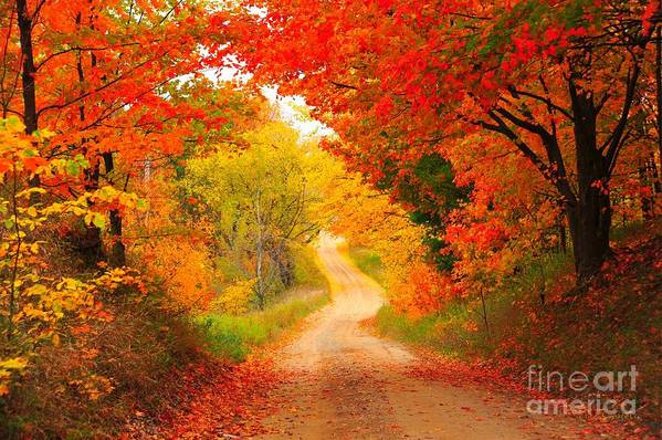 Autumn Print featuring the photograph Autumn Cameo Road by Terri Gostola