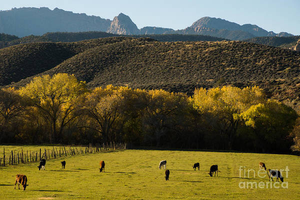 Virgin River Print featuring the photograph Autumn Pastures Along The Virgin River Rockville Utah by Robert Ford