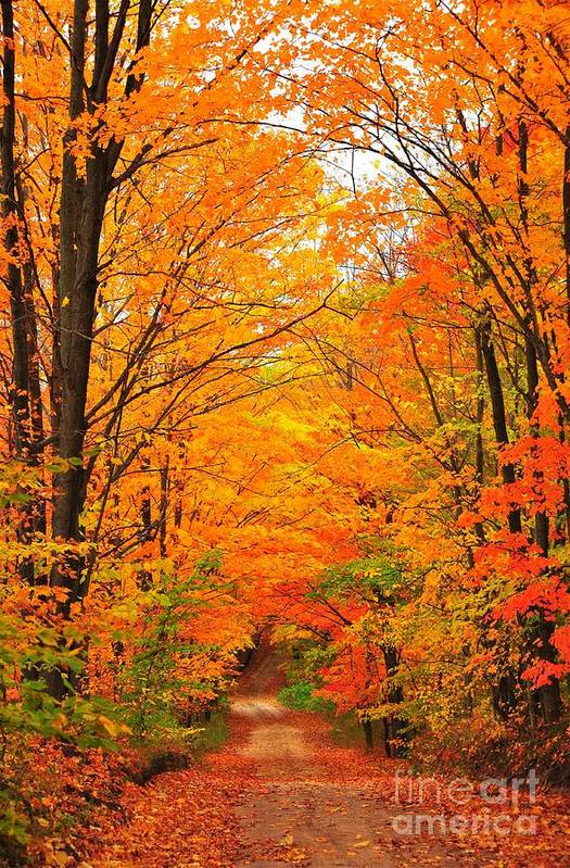 Autumn Print featuring the photograph Autumn Tunnel Of Trees by Terri Gostola