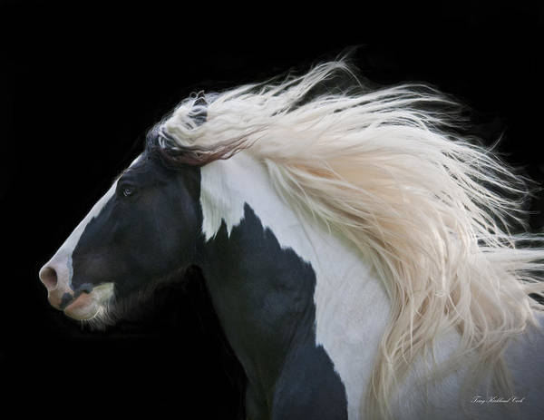 Equine Print featuring the photograph Black And White Study IIi by Terry Kirkland Cook