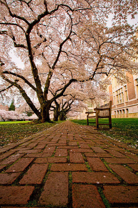 University Of Washington Print featuring the photograph Blooming Giants by Dan Mihai
