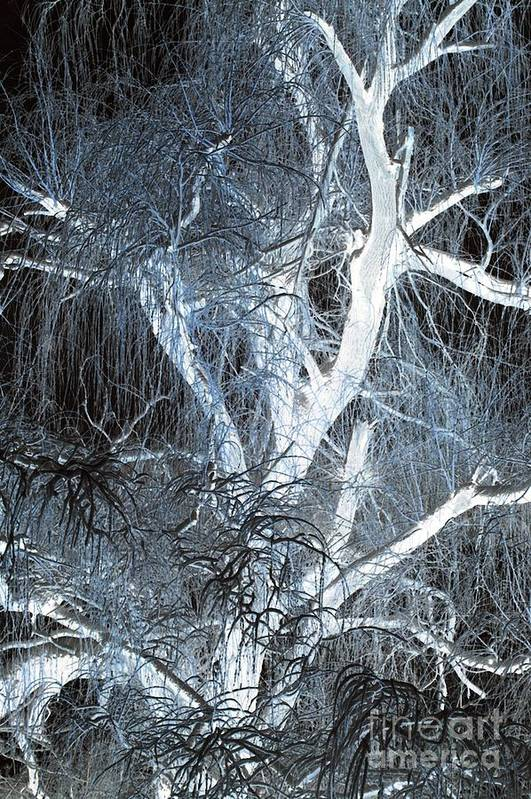 Snow Print featuring the photograph Blue Snow by Kathleen Struckle