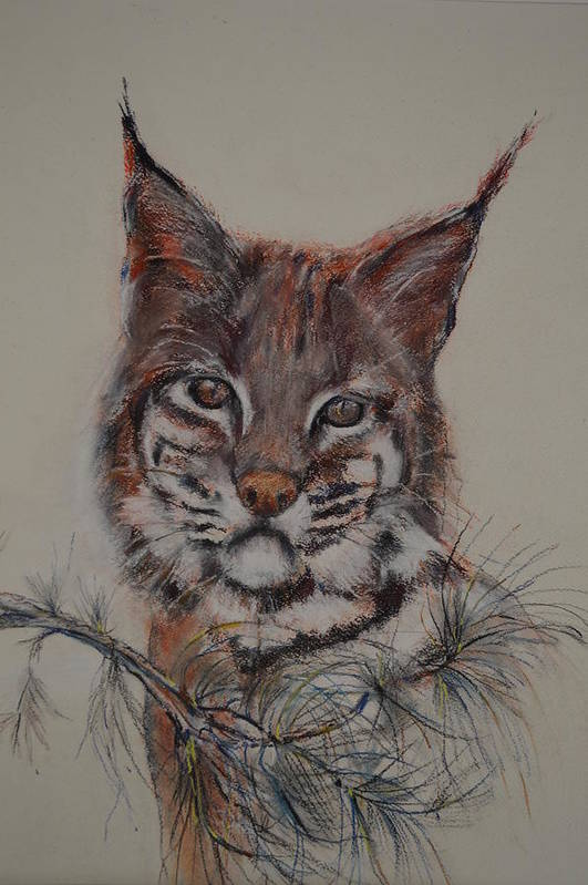 Bobcat Print featuring the painting Bobcat by Dorothy Campbell Therrien