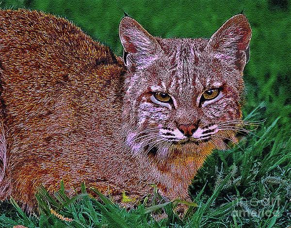 Animal Print featuring the digital art Bobcat Sedona Wilderness by Bob and Nadine Johnston