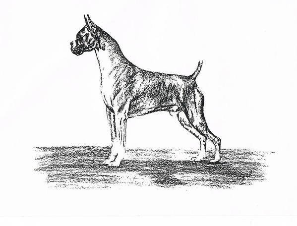 Boxer Print featuring the drawing Boxer by Joann Renner