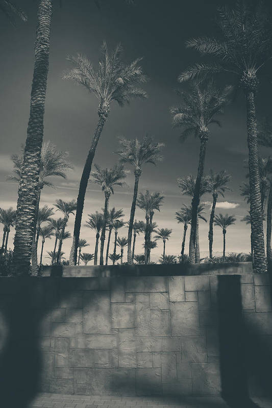 Palm Trees Print featuring the photograph Breaking Down Walls by Laurie Search