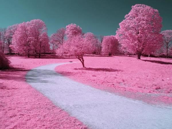 Landscape Print featuring the photograph Bubblegum Bliss by Luke Moore