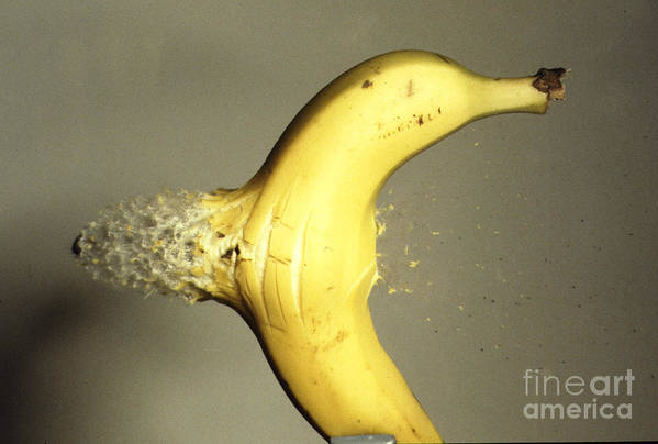 High Speed Photography Print featuring the photograph Bullet Piercing A Banana by Gary S. Settles