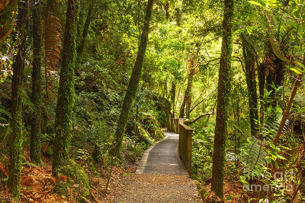 Forest Print featuring the photograph Bush Pathway Waikato New Zealand by Colin and Linda McKie