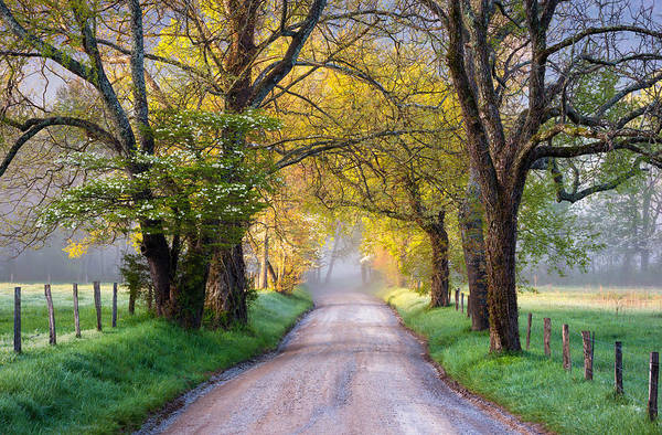 Cades Cove Print featuring the photograph Cades Cove Great Smoky Mountains National Park - Sparks Lane by Dave Allen