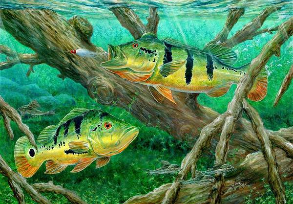 Peacock Bass Print featuring the painting Catching Peacock Bass - Pavon by Terry Fox